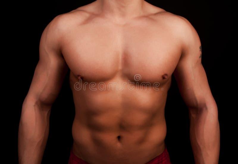 运动员ot性感的躯干 库存照片
