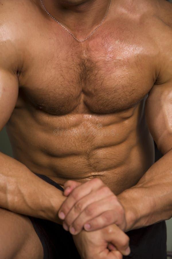 运动接近的躯干