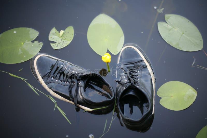 运动鞋在水中 库存图片
