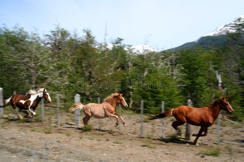 运行三的马 免版税库存图片
