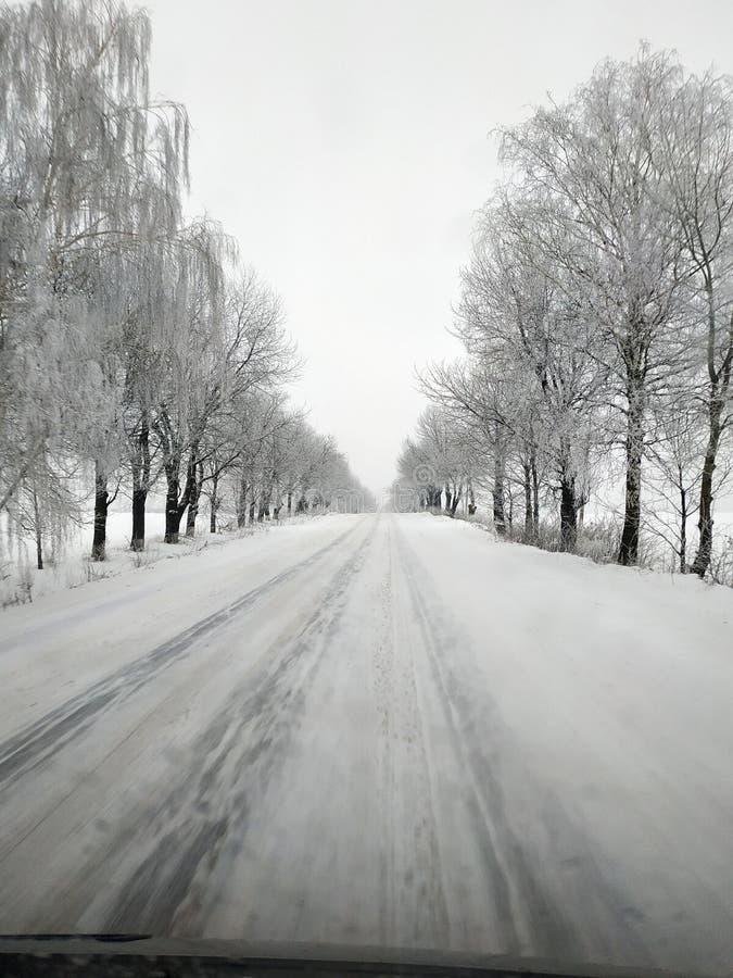 运行在冻树之间的冬天路 图库摄影