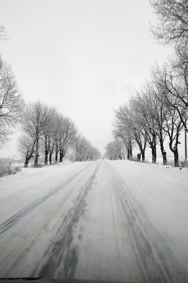 运行在冻树之间的冬天路 库存照片