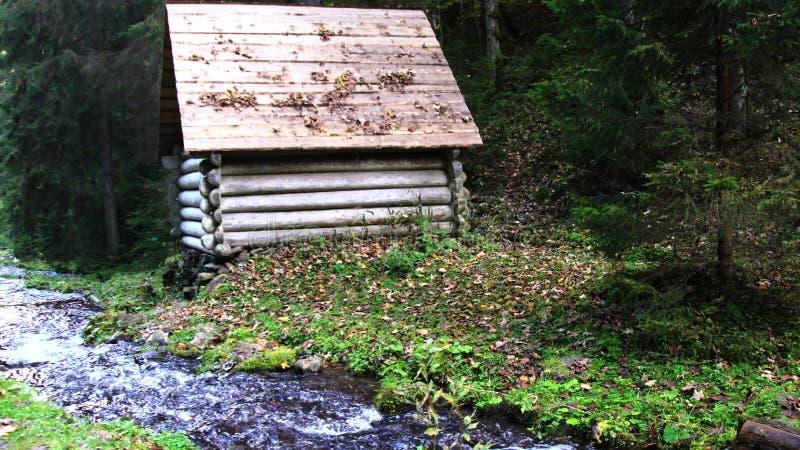 运行在生苔岩石的森林流 库存照片