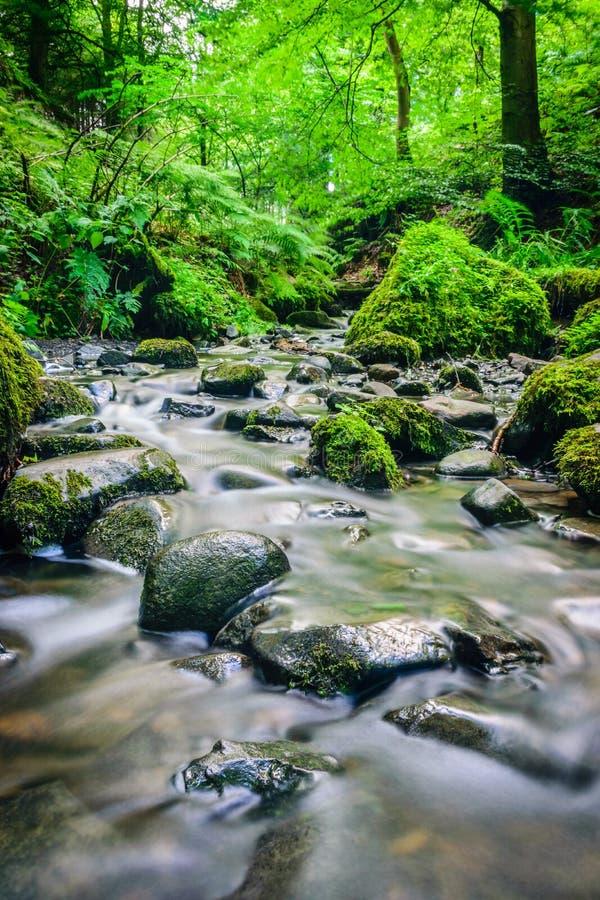 运行在生苔岩石的森林流 图库摄影