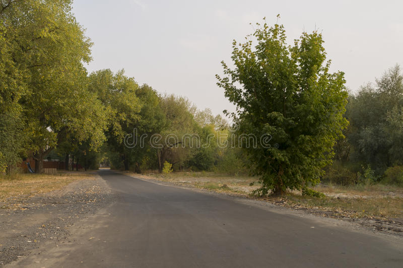 运行横跨绿色和黄色颜色早期的秋天树的路  风景 免版税图库摄影