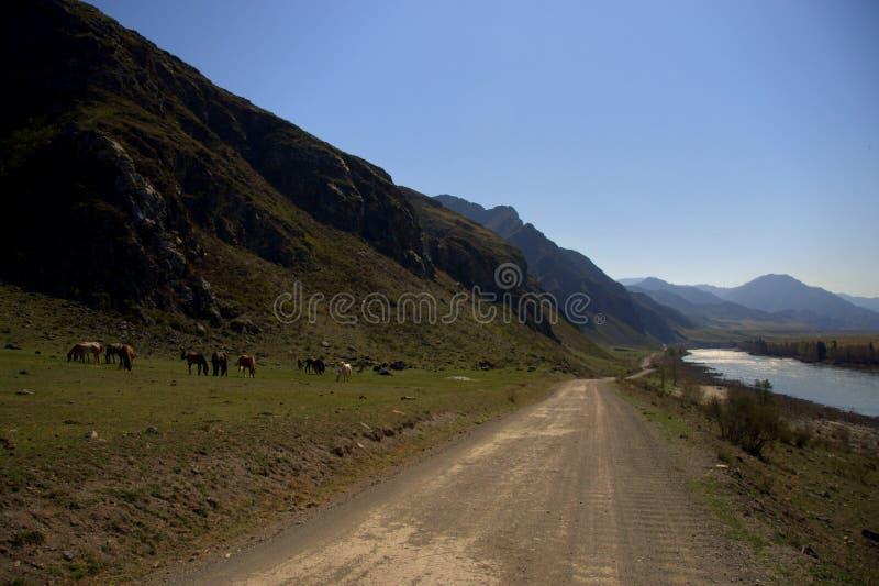 运行沿Katun山河的床的土路在高小山的脚 r ?? 库存照片