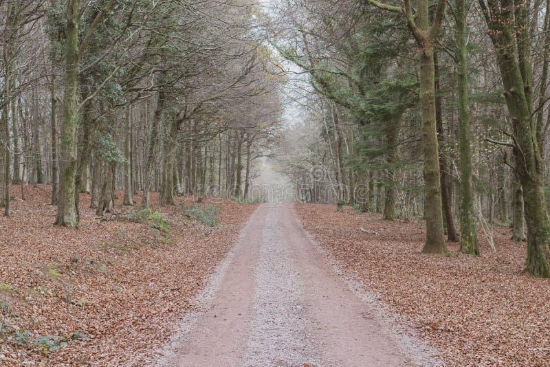 运行通过一个密集的森林的偏僻的土路 库存照片