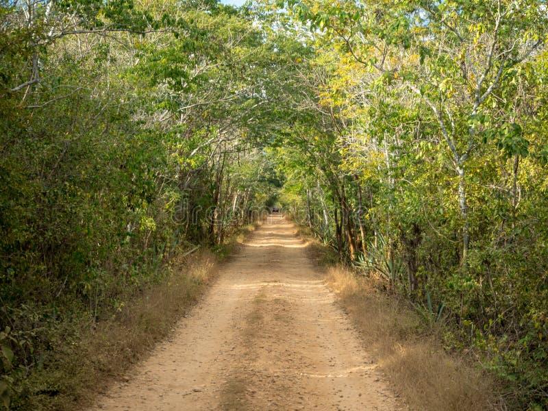 运行通过墨西哥密林,对古老玛雅废墟的森林方式的多灰尘的路 免版税库存照片