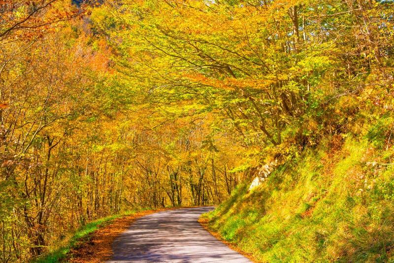 运行通过森林在一秋天天,意大利的国家道路 免版税图库摄影