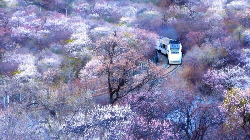 运行通过花海洋的中国高速火车  库存照片