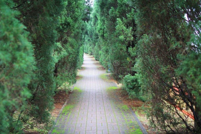 运行通过绿色树隧道的路  免版税库存图片
