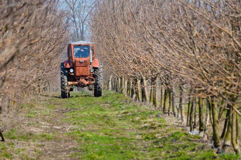 运转在春天苹果庭院里的拖拉机 免版税库存图片