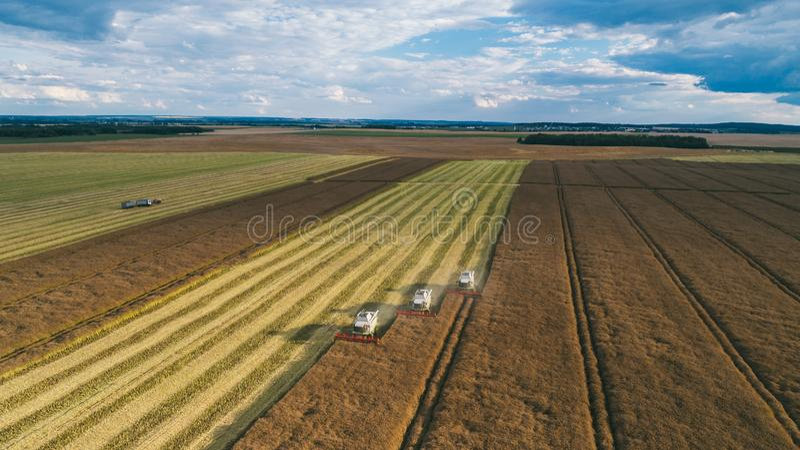 运转在领域的收割机机器 联合收割机农业机器收割金黄成熟麦田 免版税库存照片