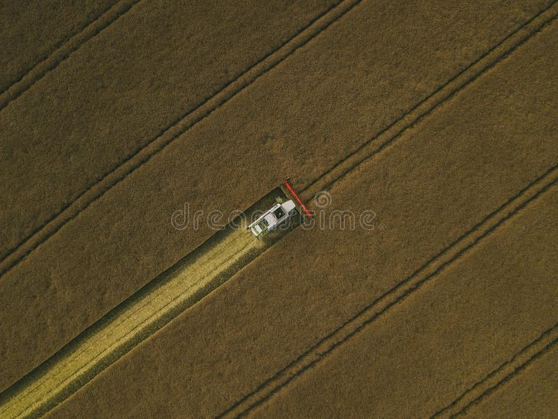 运转在领域的收割机机器 联合收割机农业机器收割金黄成熟麦田 免版税库存图片