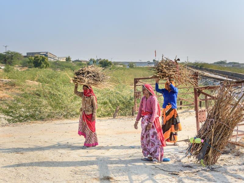 运载在他们的头的印度妇女草丛在萨姆巴尔 免版税库存照片