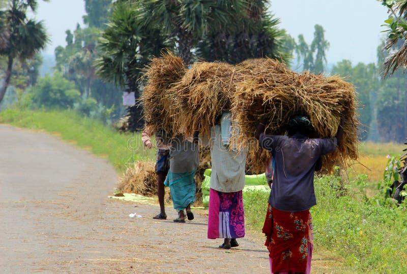 运载秸杆捆绑的妇女 免版税库存照片