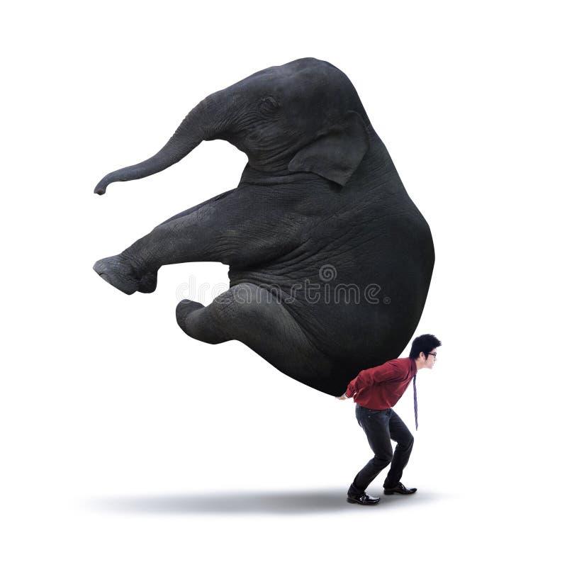 运载重的大象的商人 库存照片
