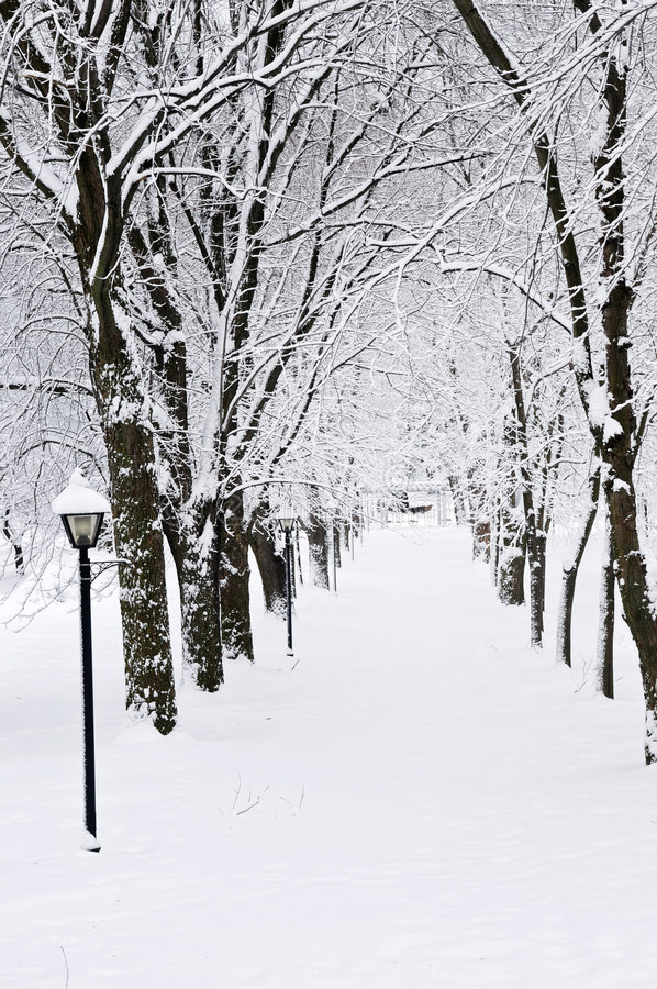 运输路线公园冬天 库存照片