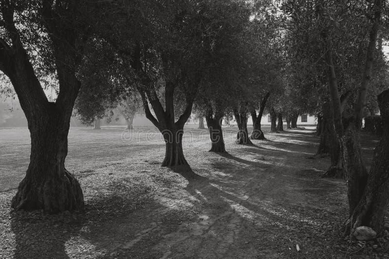 运输路线橄榄 免版税图库摄影