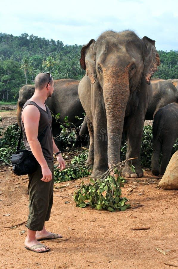 近人对大象 图库摄影