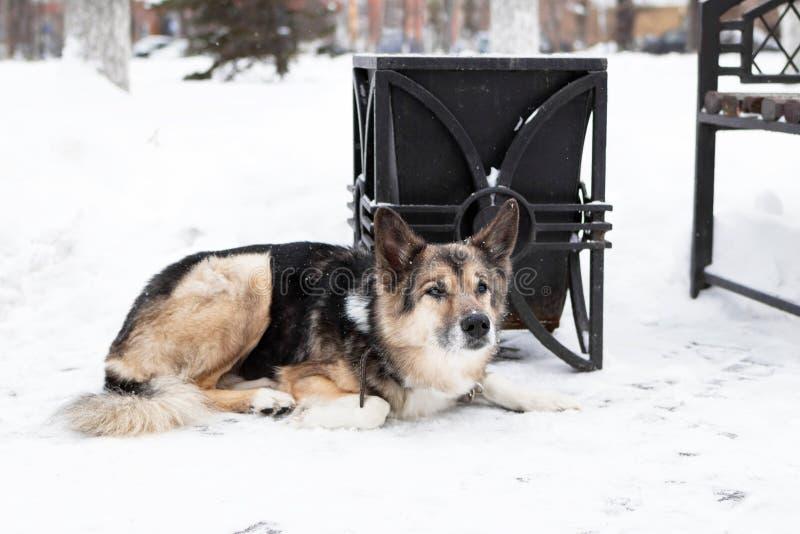 近无家可归的杂种狗对一个缸和一条长凳在冬天多雪的公园 库存照片