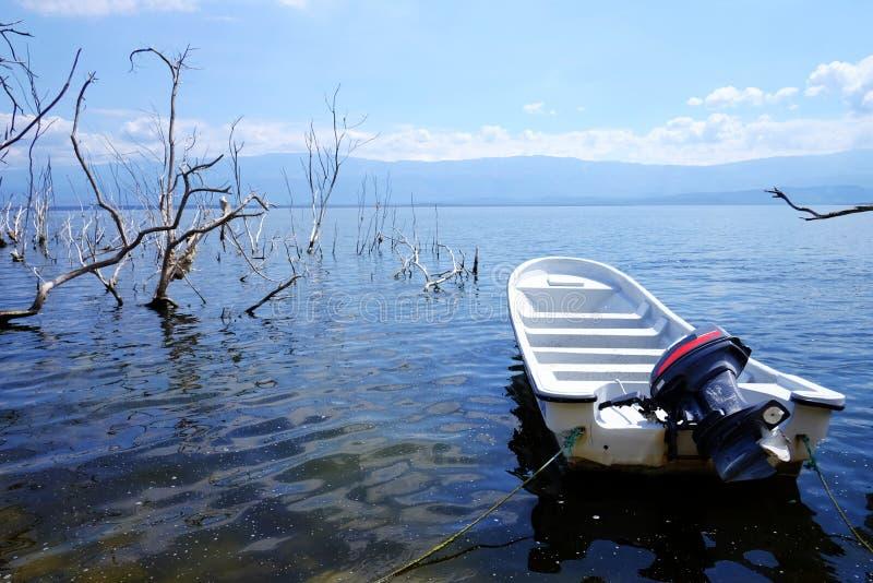 近汽艇对死的树在Enriquillo湖 死的森林在水中 在沼泽的死的树 在a的死的树 免版税库存照片