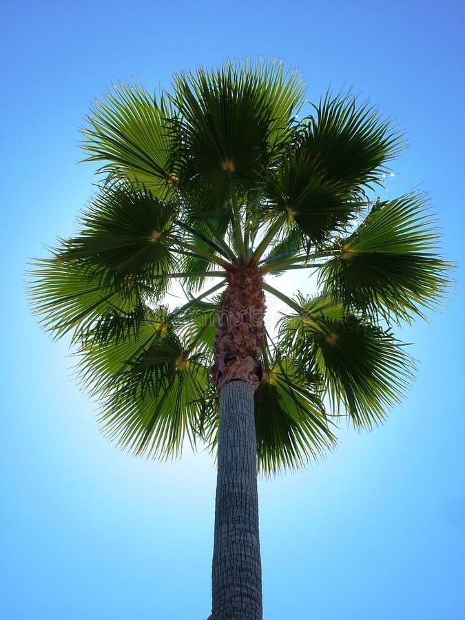 返回被点燃的棕榈树 图库摄影