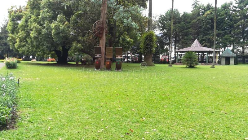 这个图象是斯里兰卡花园 免版税库存图片