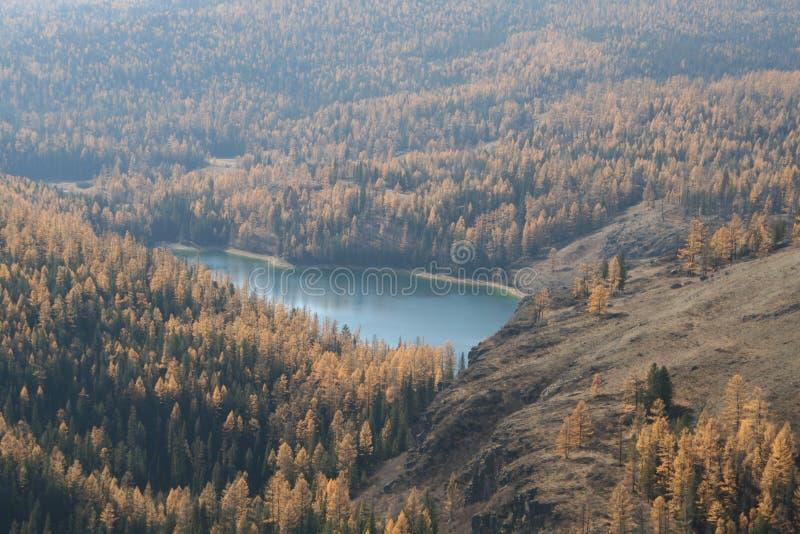 这个地方在一个厚实的森林,在房子附近的比赛狩猎里,在给一条美丽的河的森林投上阴影附近并且形成湖 免版税图库摄影