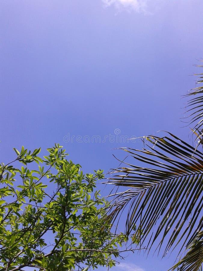 这个天空视图 免版税库存图片