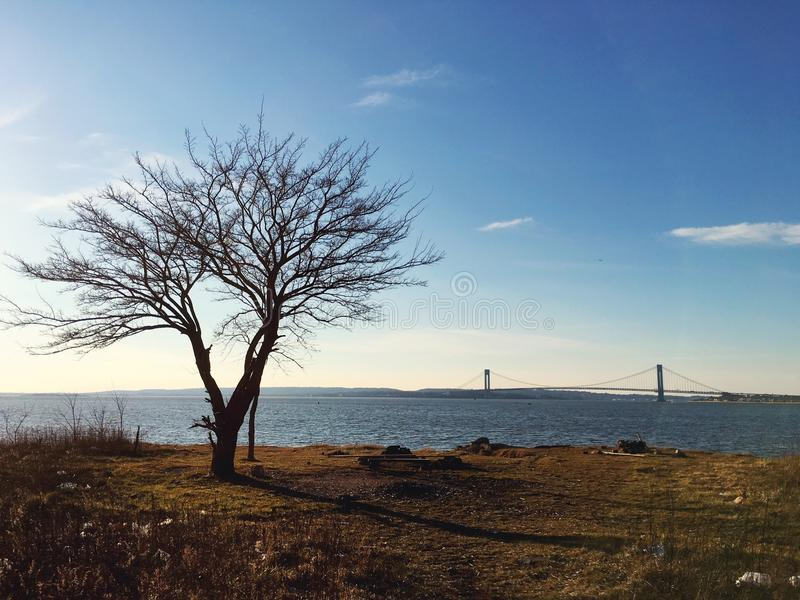 这个老树纽约海湾布鲁克林 免版税库存照片