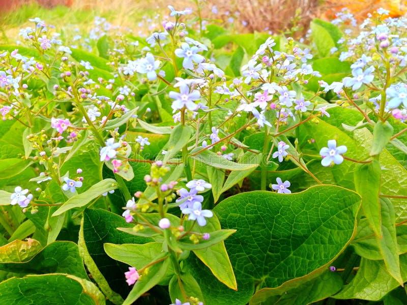 这些花是vaselki 库存图片