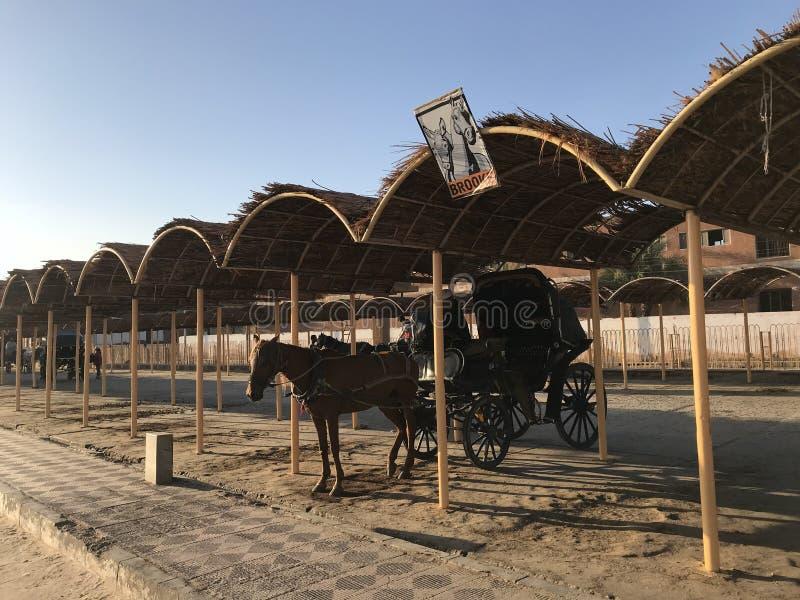 这匹马称法拉利 免版税库存照片