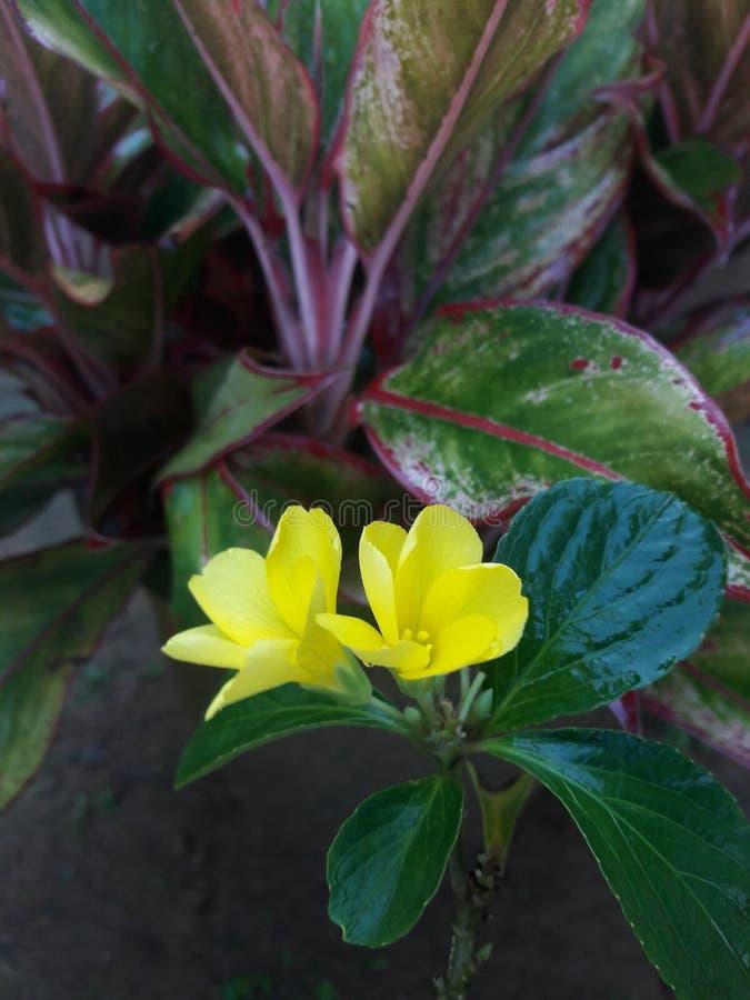 这是一棵美丽的植物 库存图片