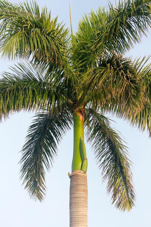 这是一棵鲜亮的棕榈树! 库存照片