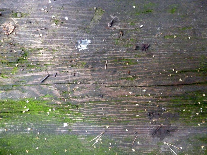 这是与自然种子和叶子的木板纹理 库存图片