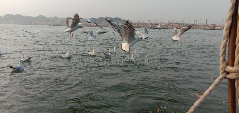 这是印度阿拉哈巴德桑加姆鸟的象征 图库摄影