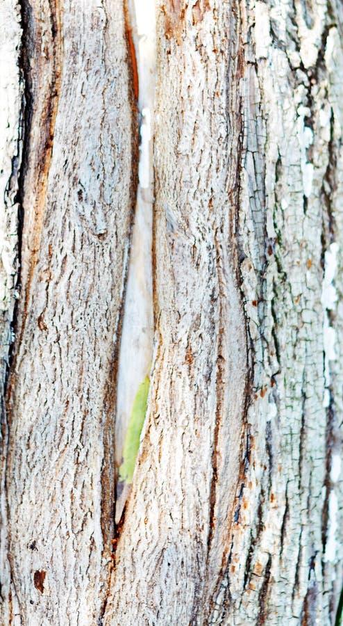 这是树的奇怪的壳 免版税库存图片