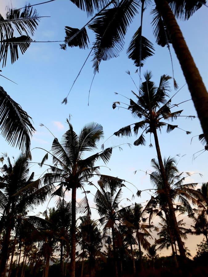 这是椰树土地! 库存图片