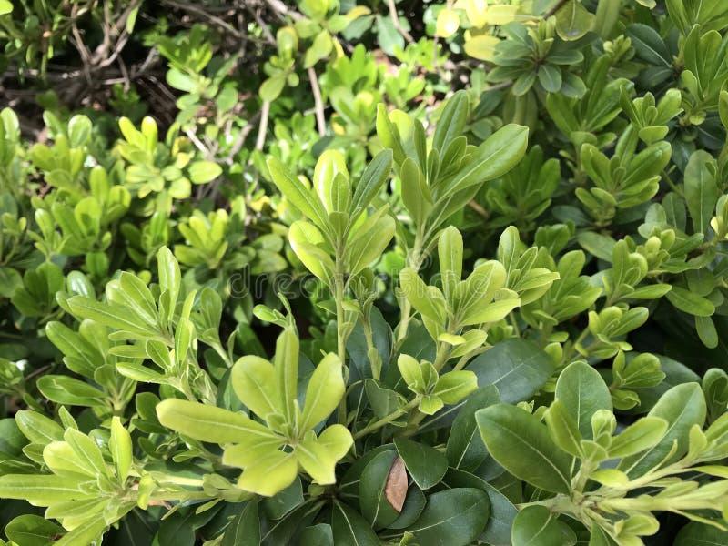 这是绿色植物 免版税库存图片