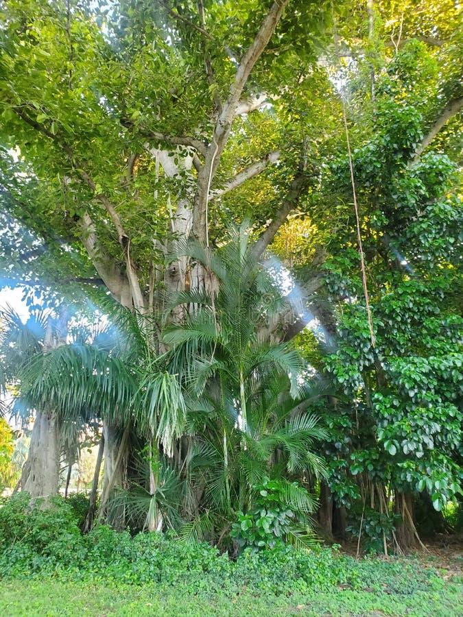 这样一棵庄严树 自然真实地美好 库存图片