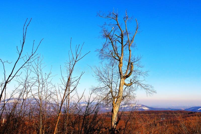 这样一棵美丽的树 免版税库存图片