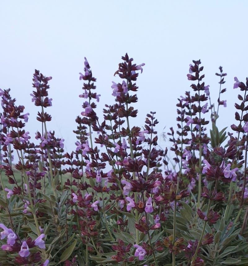 野生植物 免版税库存图片