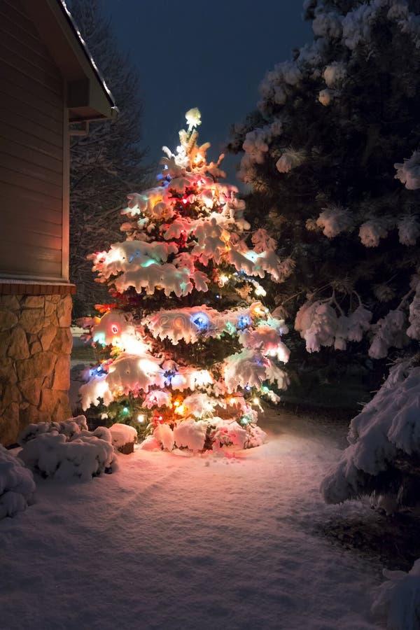 这棵积雪的圣诞树明亮地引人注意反对晚上光深蓝口气在这个寒假sce的 库存照片