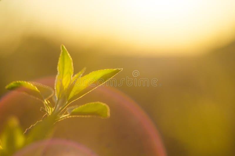 这里春天 落日的明亮的光芒在背景的被弄脏的第一绿化与明亮的人工制品 自然醒, d 库存照片
