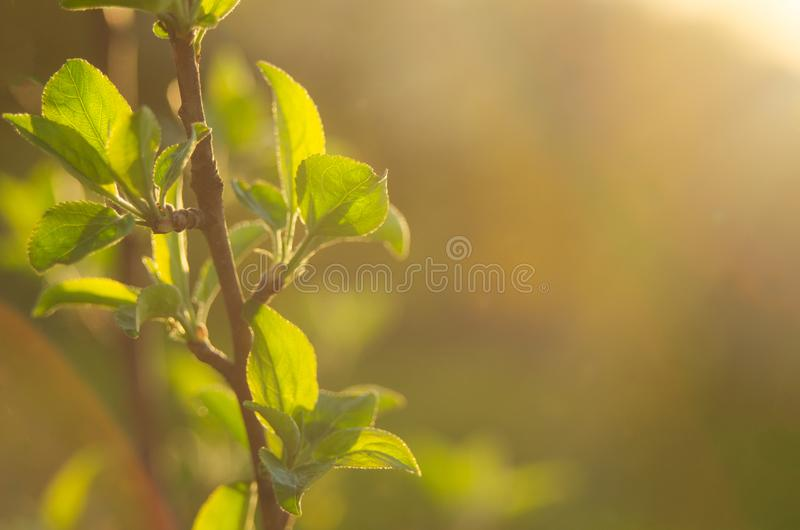 这里春天 落日的明亮的光芒在背景的被弄脏的第一绿化与明亮的人工制品 自然醒, d 免版税库存图片