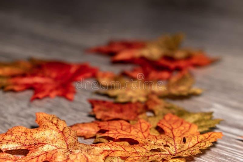 这里秋天 库存照片