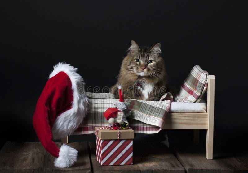 进入床的猫 免版税库存照片