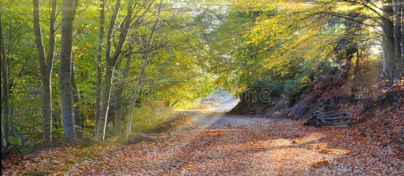 进入的森林发出光线星期日 免版税库存图片