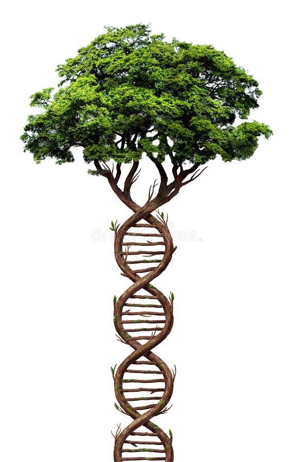 进化树 抽象插图 免版税库存图片